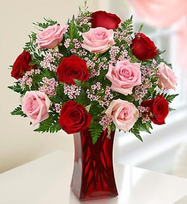 Shades of Pink and Red??¢ Premium Long Stem Roses